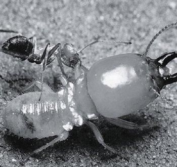 鞭虫卵图片手绘图